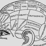 Elaee et le bonheur dans le cerveau
