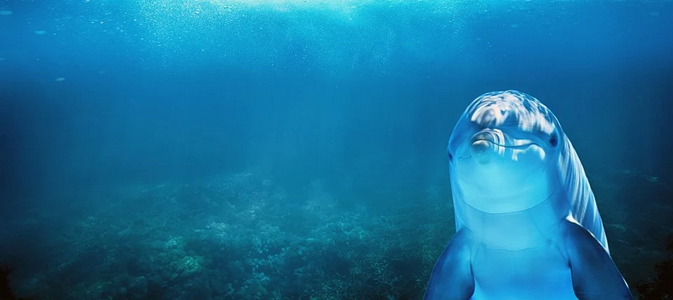 stratégie systémique dauphin carpe requin